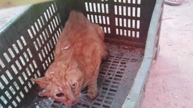 بالصور: الحماية المدنية تنقذ قطا سقط في بئر منذ اكثر من سنة بالقصرين