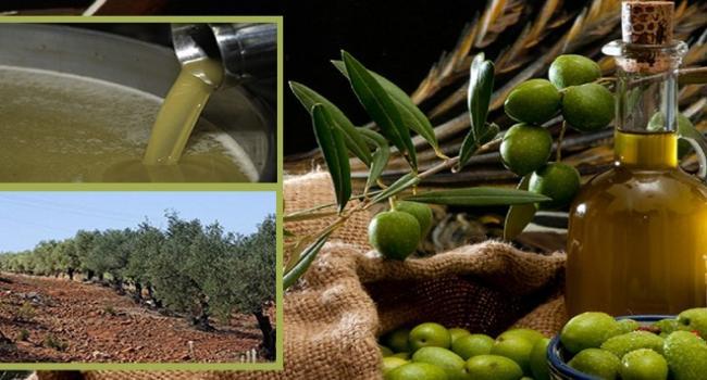 بداية من اليوم الجمعة بيع كميات من زيت الزيتون للعموم بـ7 دنانير و800 مليم