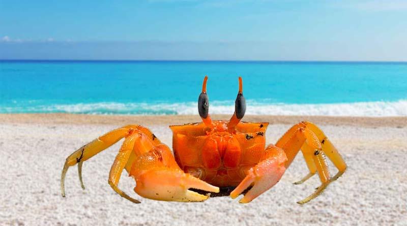 التنفّس عند الحيوانات البحريّة: السّرطان كمثال-السنة الرابعة ابتدائي-الثلاثي الثالث 1)
